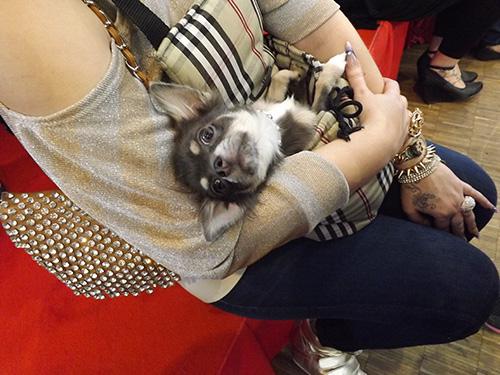 j'ai rencontré un chien aussi ;-) N'est-il pas trop mignon